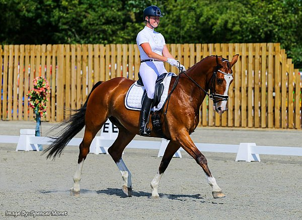 codham_park_pet_plan_area_festival_british_dressage.jpg